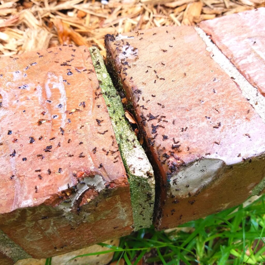 get rid of ants in the yard