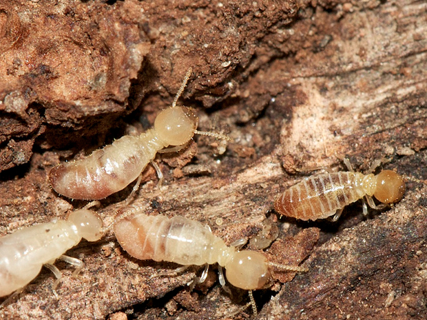termites affect your home?